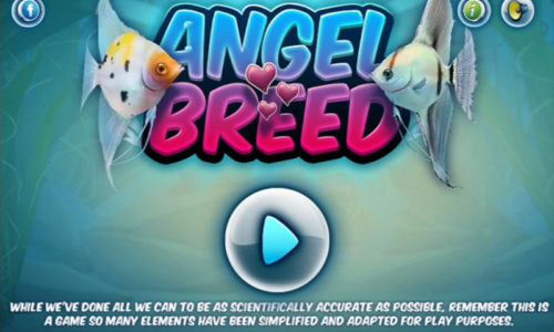 Angel Breed